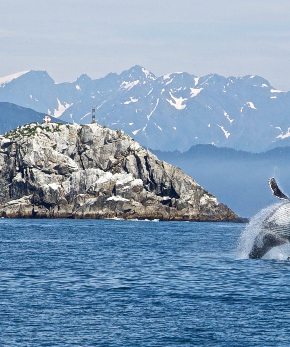 humpback-whale-1744267